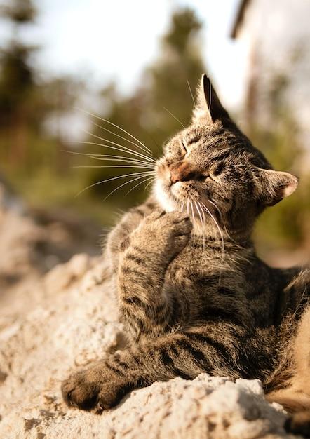 目を閉じた猫の縦のショット 無料写真