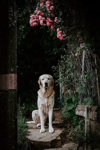 ぼやけた背景とピンクの花の下に座っているかわいい犬の垂直ショット 無料写真