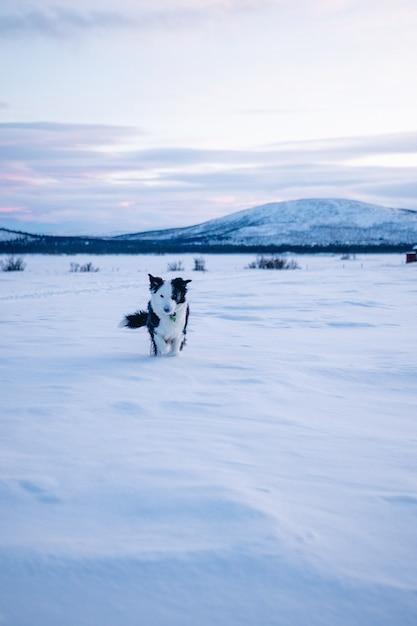 스웨덴 북부의 설원에서 걷는 귀여운 강아지의 세로 샷 무료 사진