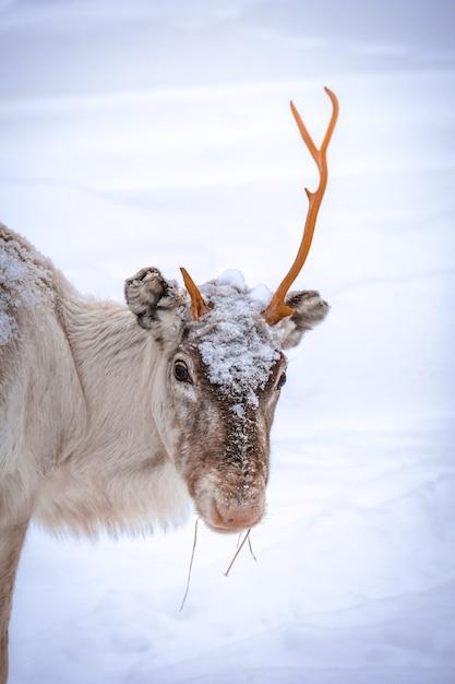 Вертикальный снимок оленя с одним рогом на снежном фоне Бесплатные Фотографии