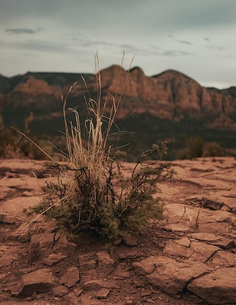 Вертикальный снимок сухого куста, растущего на сухой земле Бесплатные Фотографии