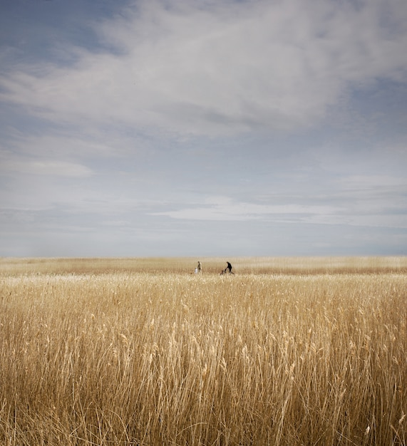 イギリス、サフォーク州のスネイプモルティングスの背後にあるリードベッドのフィールドの垂直方向のショット 無料写真