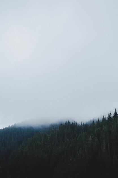 霧の日の森の垂直ショット 無料写真
