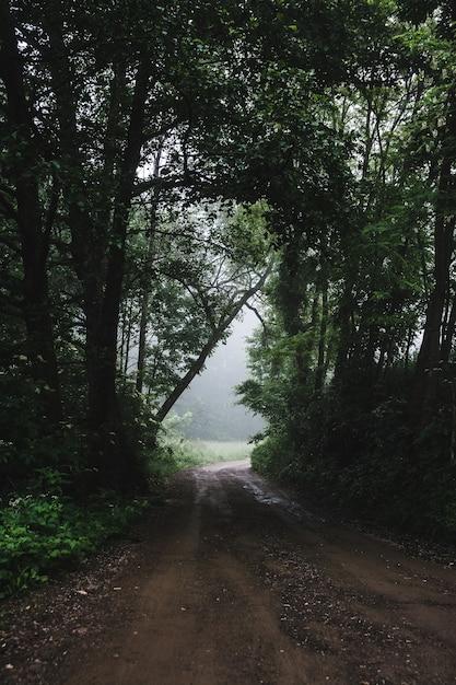 안개가 자욱한 날씨 동안 숲 도로의 세로 샷 무료 사진