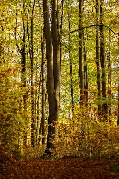 Вертикальная съемка леса с зелеными и желтыми лиственными деревьями в германии Бесплатные Фотографии