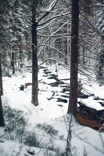 雪に覆われた背の高い木と森の垂直ショット 無料写真
