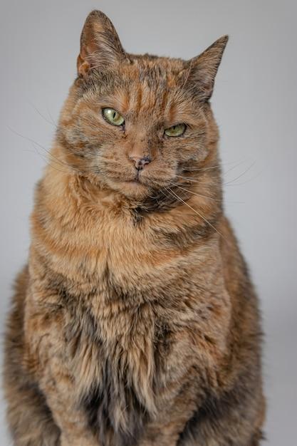 Вертикальный снимок сварливого кота, смотрящего в камеру Бесплатные Фотографии