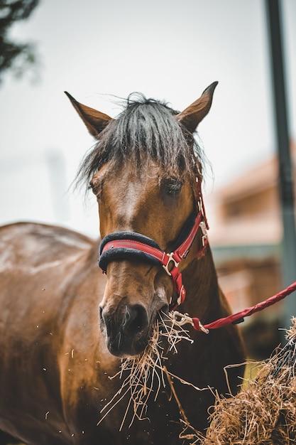干し草を食べる馬の垂直ショット 無料写真