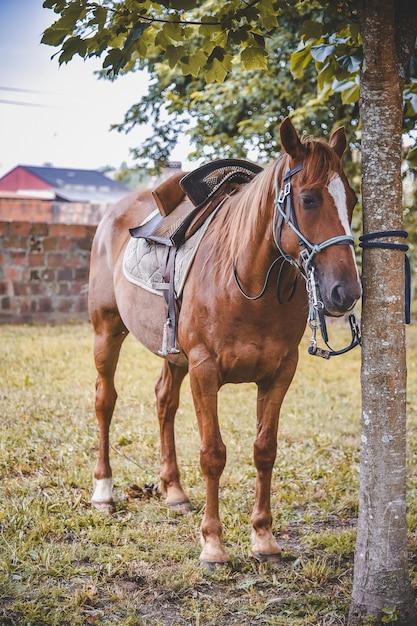 Вертикальный снимок лошади, привязанной к дереву седлом Бесплатные Фотографии