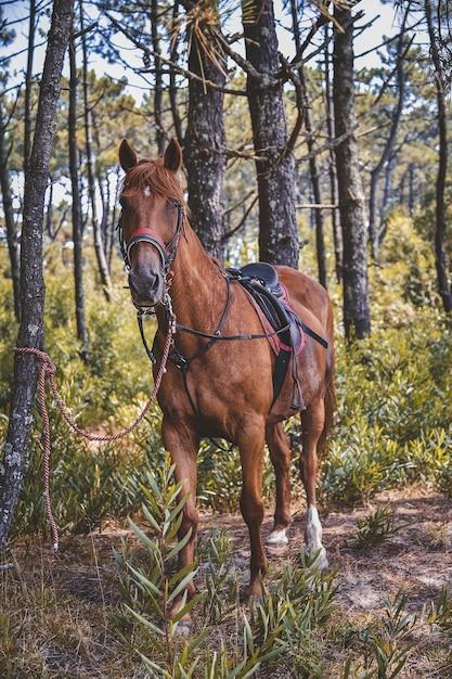 Вертикальный снимок лошади в седле, смотрящей в камеру Бесплатные Фотографии