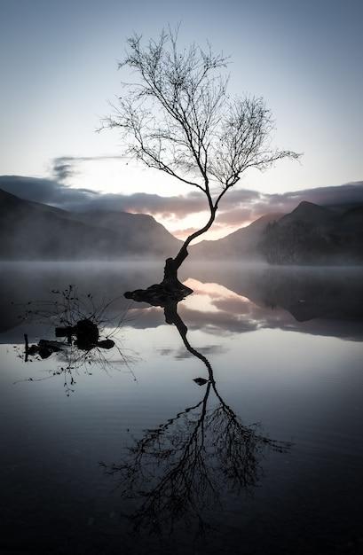 日没時に山に囲まれた湖に反射する葉のない木の垂直ショット 無料写真