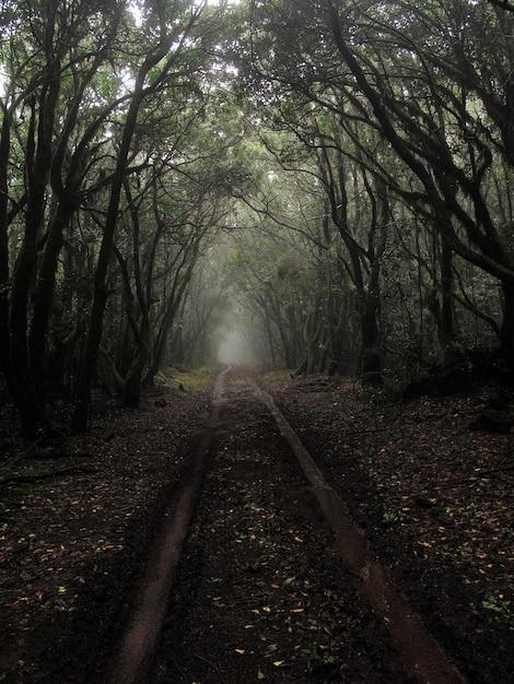 霧の中で背の高い木の真ん中に泥だらけの経路の垂直ショット 無料写真