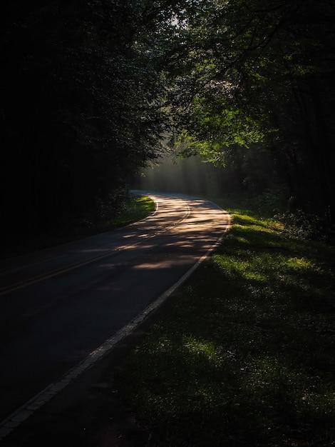 Вертикальный снимок узкой тропинки в лесу в окружении множества зеленых деревьев Бесплатные Фотографии