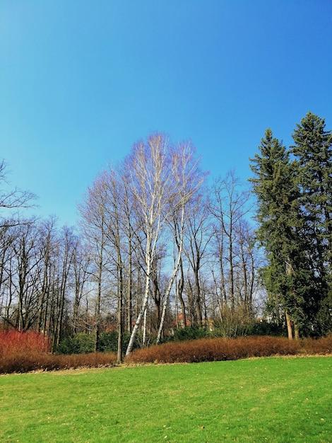 Вертикальный снимок парка, полного травы и деревьев в дневное время в еленя-гуре, польша. Бесплатные Фотографии