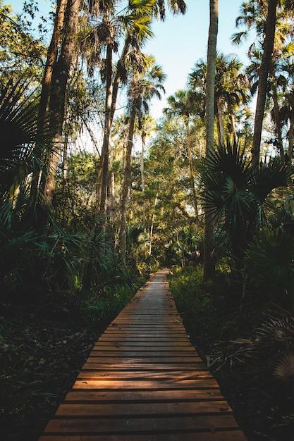 Вертикальная съемка дорожки из деревянных досок в окружении тропических растений и деревьев Бесплатные Фотографии