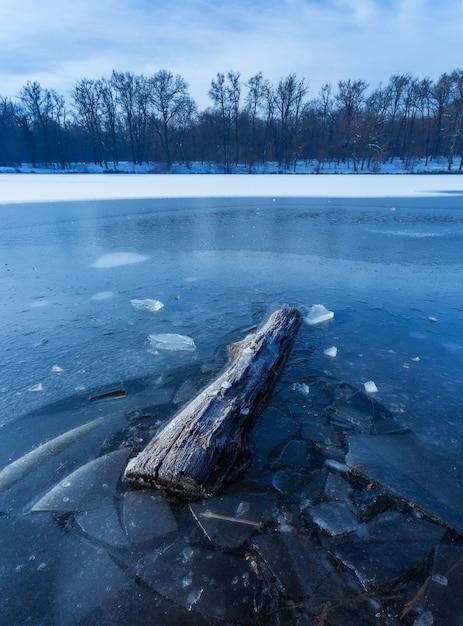 Вертикальный выброс кусок дерева в замерзшем озере в максимире, загреб, хорватия Бесплатные Фотографии
