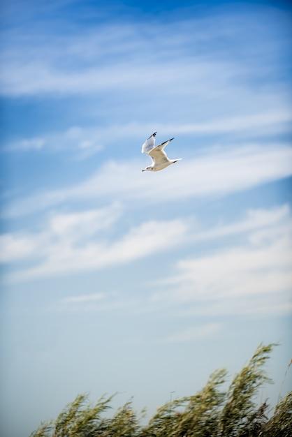 昼間の背景に青い曇り空と飛行中のカモメの垂直ショット 無料写真