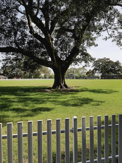 Вертикальная съемка одного дерева, растущего в поле, изолированных с забором Бесплатные Фотографии