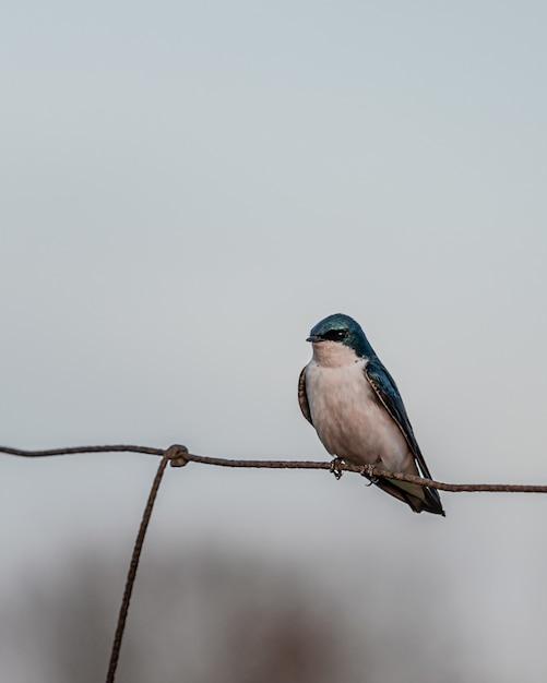 金属フェンスに青と白の小さな鳥の垂直ショット 無料写真