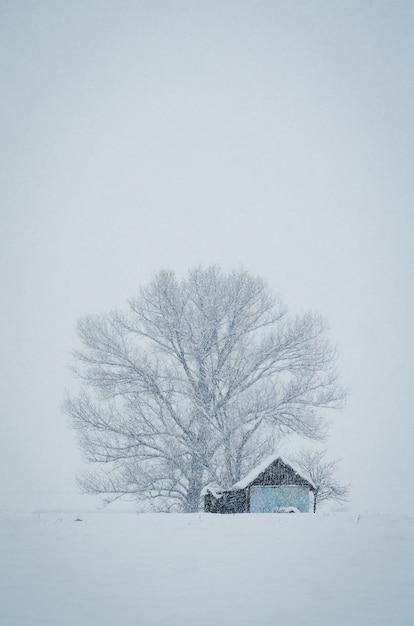 Вертикальный снимок небольшой хижины перед большим заснеженным деревом в туманный зимний день Бесплатные Фотографии
