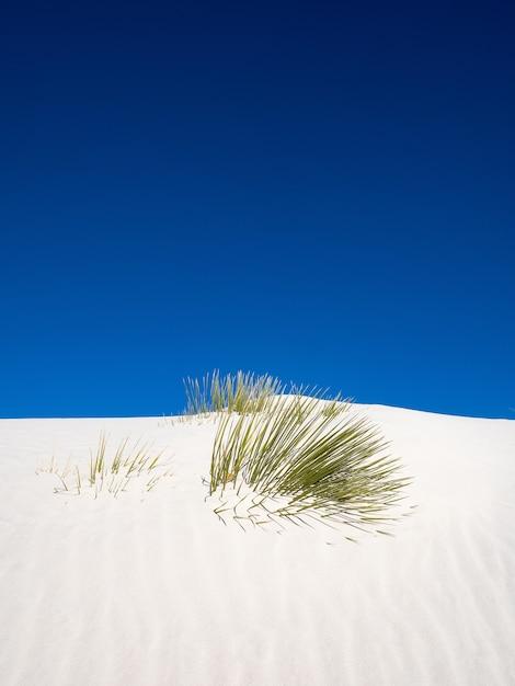 ホワイトサンズ国立公園の砂丘を越えようとしている石鹸の木のユッカの垂直ショット 無料写真