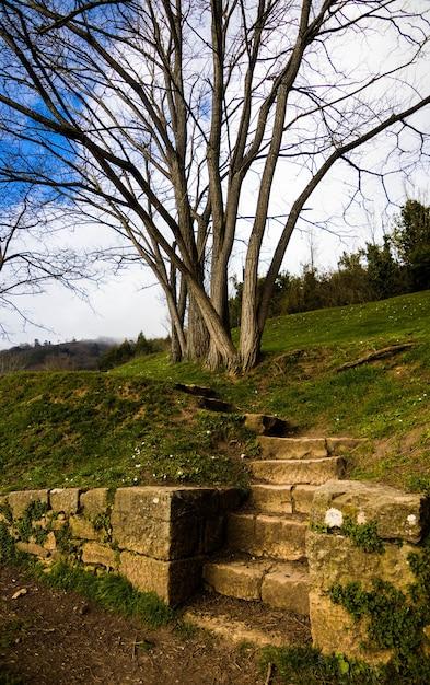 葉のない木の近くの丘の上の階段の垂直ショット 無料写真