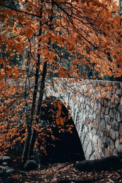 돌 다리와 오렌지와 나무의 세로 샷 가을 단풍 무료 사진
