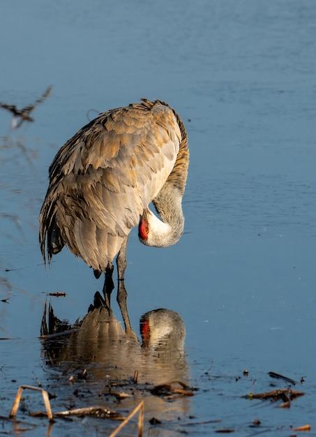 水の上で身だしなみを整えるコウノトリの垂直ショット 無料写真