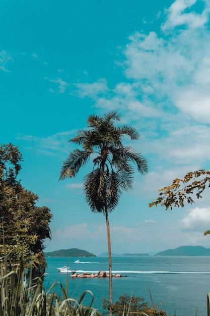 リオのビーチで背の高いヤシの木の垂直ショット 無料写真