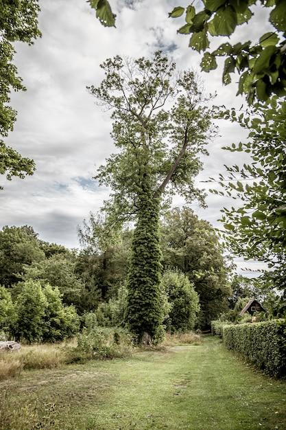 周りに植物が生えている背の高い木の垂直ショット 無料写真