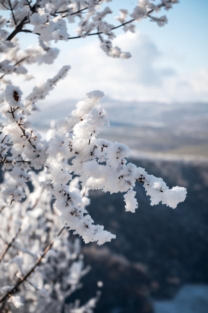 눈에 덮여 나무의 세로 샷, 산에서 아름다운 아침 무료 사진