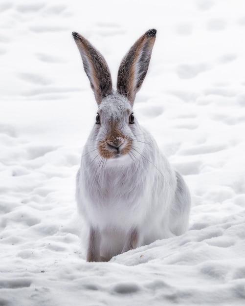 雪に覆われたフィールドで白いウサギの垂直ショット 無料写真