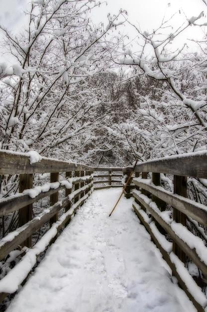 Вертикальный снимок деревянного моста посреди заснеженных деревьев зимой Бесплатные Фотографии