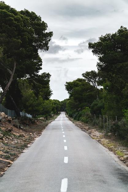 森の真ん中にある果てしない道の縦のショット 無料写真