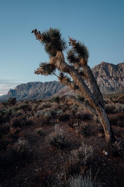 丘で育つエキゾチックな木の垂直方向のショット 無料写真