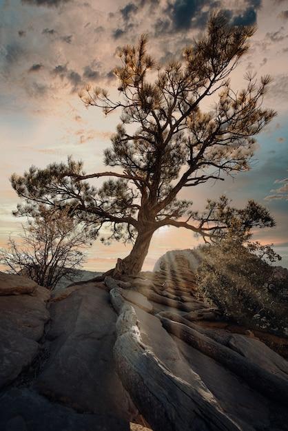曇った夕焼け空の下の岩の上にあるエキゾチックな木の垂直ショット 無料写真