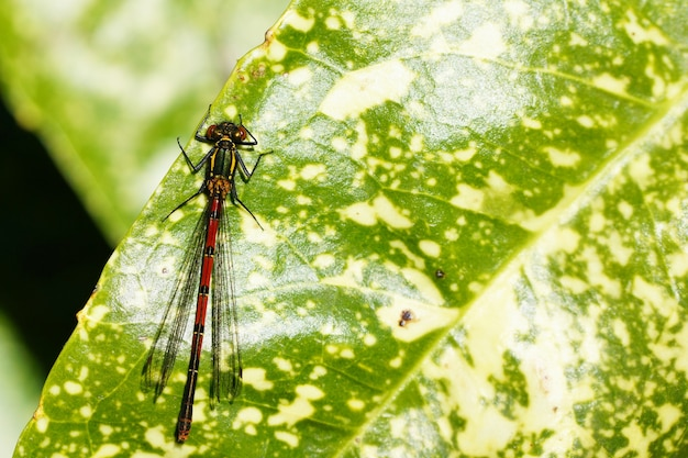 Вертикальный снимок насекомого на зеленом листе Бесплатные Фотографии