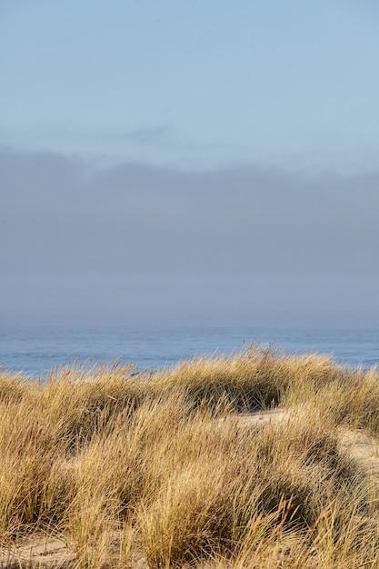 キャノンビーチ、オレゴン州の朝のビーチグラスの垂直ショット 無料写真