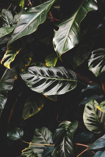熱帯林の森の美しい緑の葉の垂直ショット 無料写真