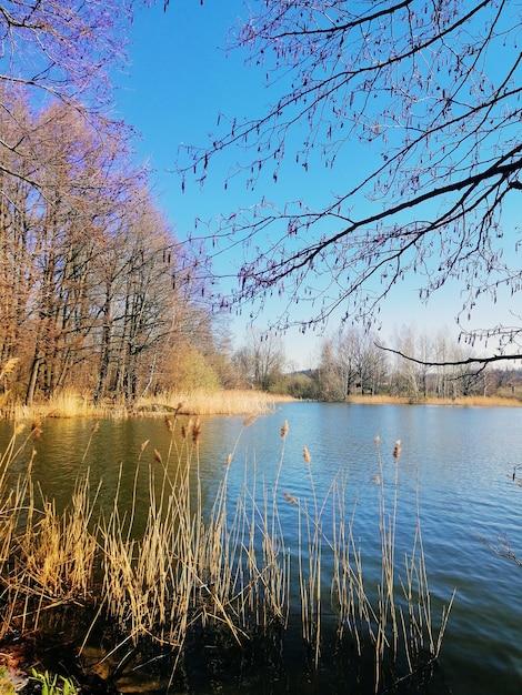 Вертикальный снимок тростника и деревьев рядом с прудом в еленя-гуре, польша. Бесплатные Фотографии
