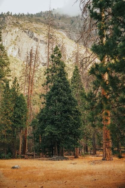Вертикальный снимок травы с высокими деревьями и скалистой горой Бесплатные Фотографии