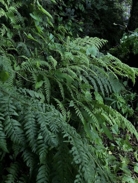 森に生えている緑の植物の垂直ショット 無料写真