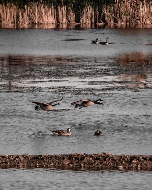 水の近くを飛んでいる海鳥の垂直ショット 無料写真