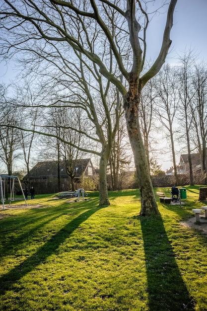緑の風景にいくつかの木の垂直方向のショット 無料写真