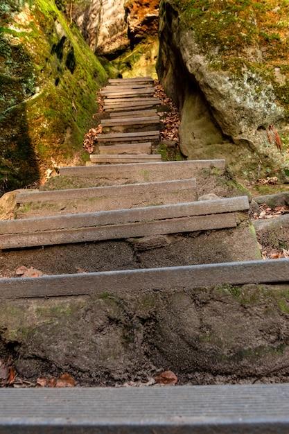 岩の上の苔に囲まれた森の階段の垂直ショット 無料写真