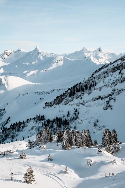 Вертикальный снимок высоких деревьев зимой Бесплатные Фотографии
