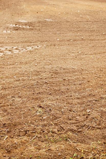 土壌に生えている乾いた草の垂直ショット 無料写真