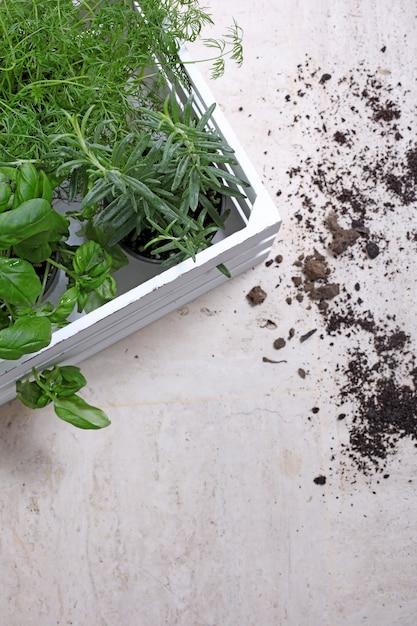 土壌の横にある緑の植物の垂直ショット 無料写真