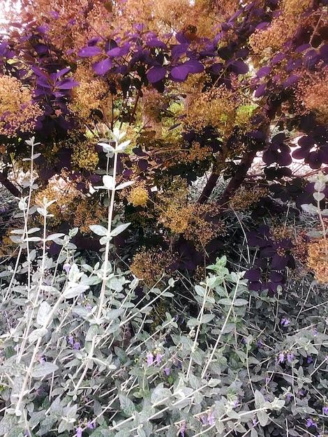 隣り合った異なる植物の葉の垂直ショット 無料写真