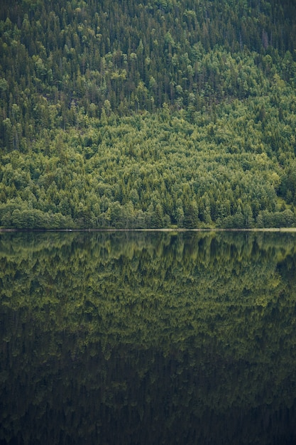 ノルウェーの穏やかな湖の美しい木の覆われた山の反射の垂直ショット 無料写真
